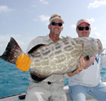 Great Black Grouper