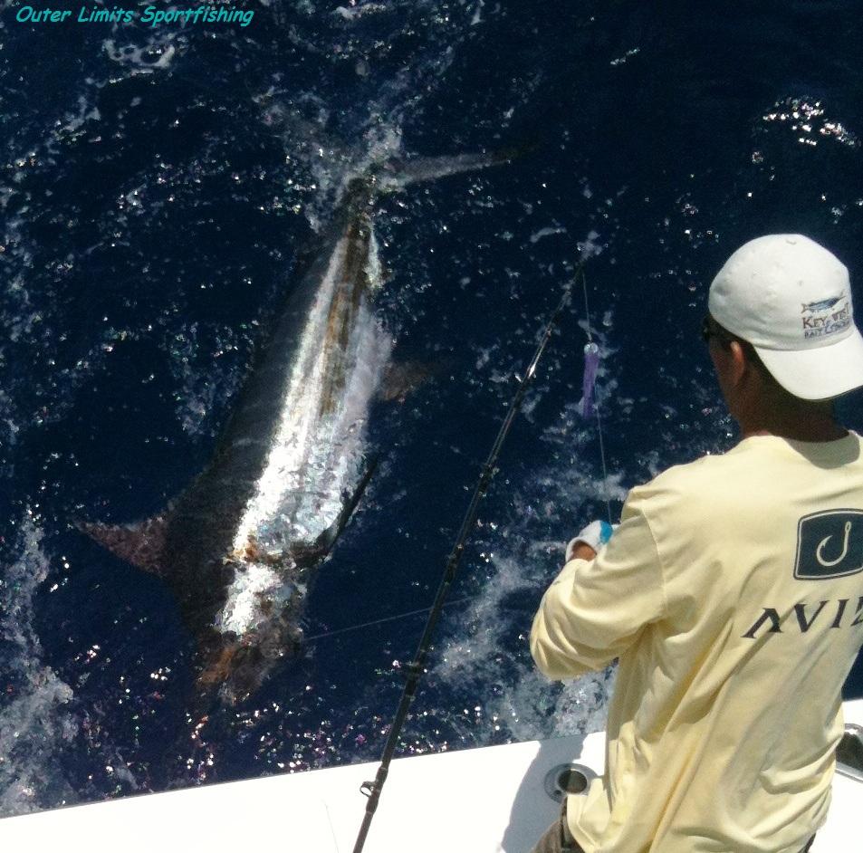 KC Blue Marlin