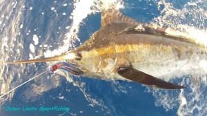 OL Blue Marlin 7-26-13