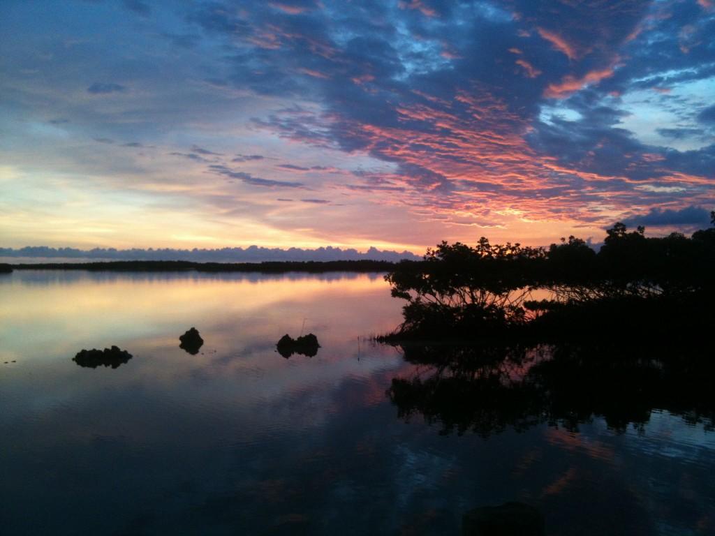 Backyard Morning Sunrise