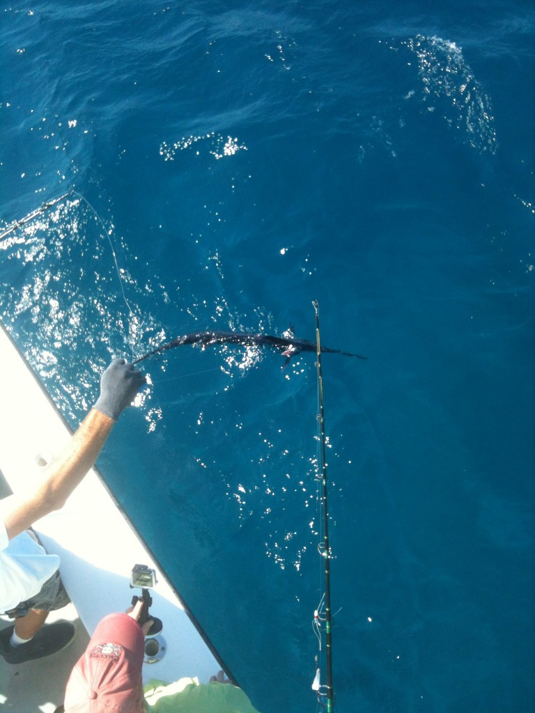 Zach's Sailfish