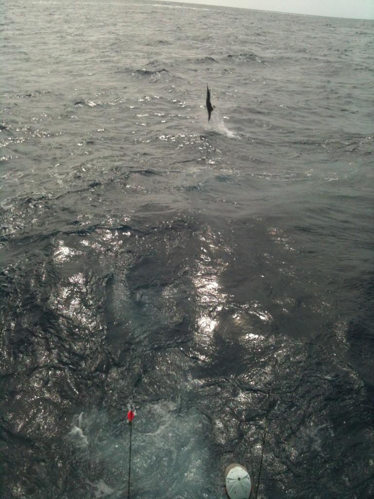 Kite Jumper