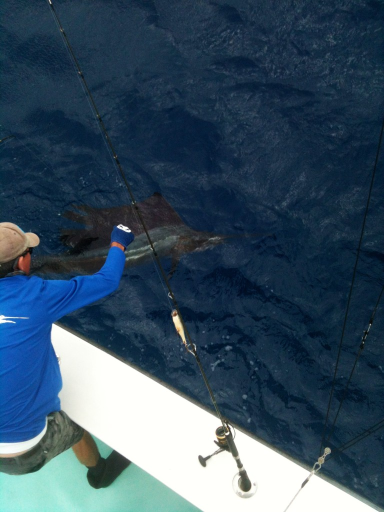 Another Sailfish Release!