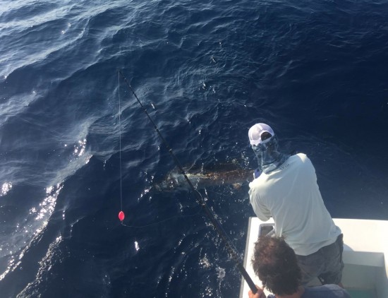 Sailfish Release for Ricky